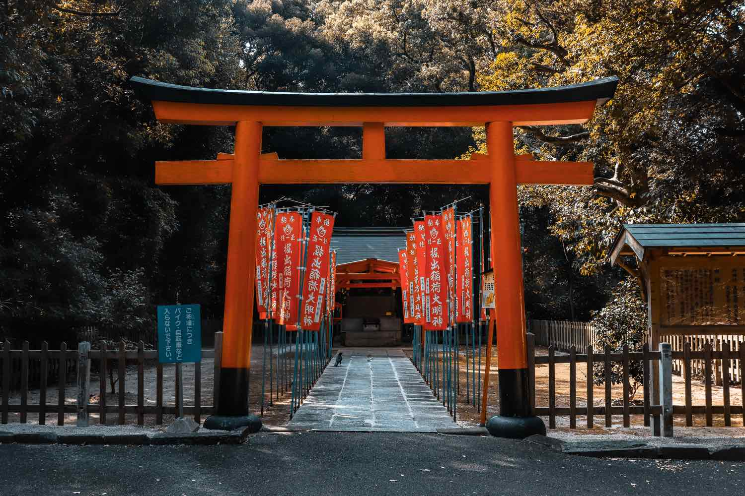 japan things to know travel tips shrine