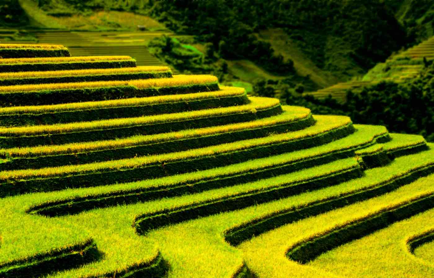 vietnam travel tips and things to know rice fields terraced