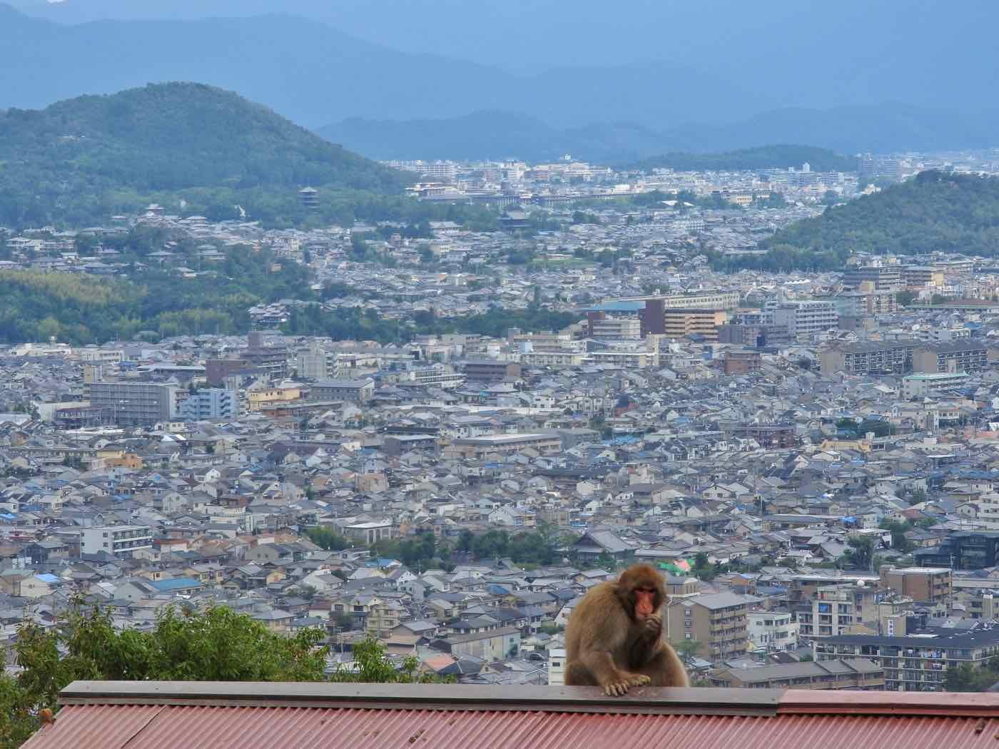 japan itinerary two weeks kyoto arashiyama monkey