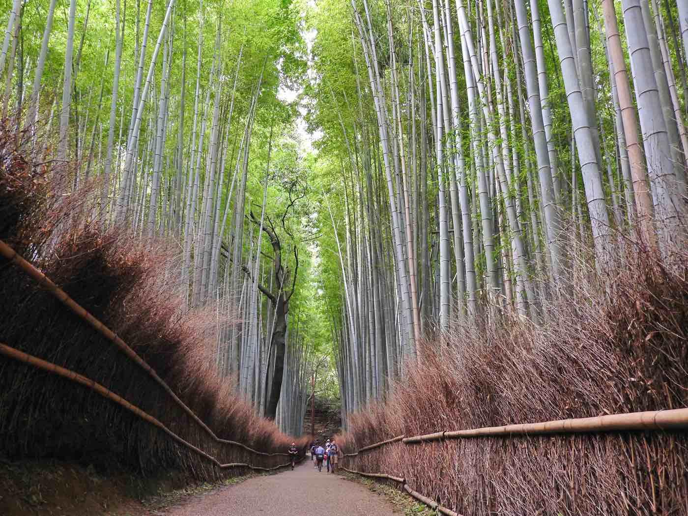 kyoto things to do arashiyama bamboo forest