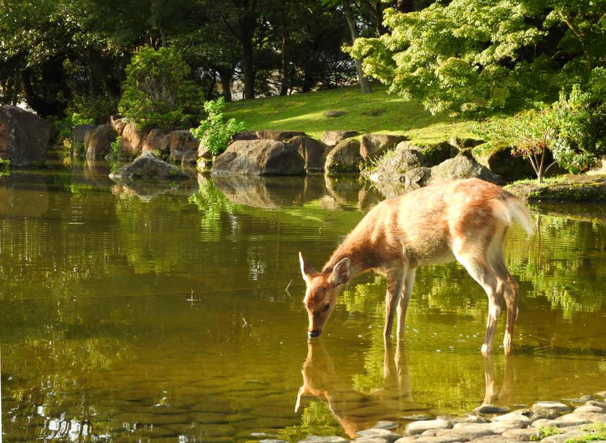 things to do in kyoto day trip to nara